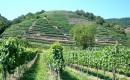 Besichtigung und Verkostung in den wunderbaren Weinbergen der Wachau