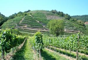 Wunderbare Weinberge in der Wachau
